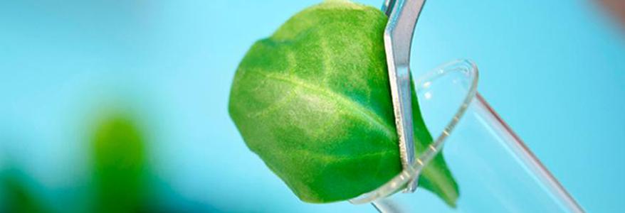 اهمیت نمونه برداری برگ در باغات از نظر زمان و روش صحیح نمونه برداری